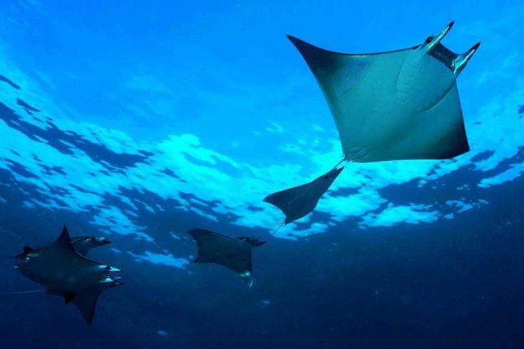 25-euro-divers-maldives-14-02-2017