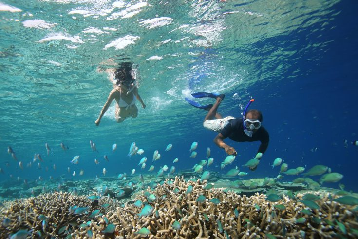 69298313-H1-Snorkelling_in_the_lagoon