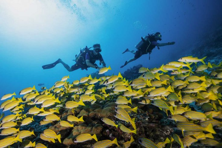 OO_RR_Diving__45A3599_MASTER_Small