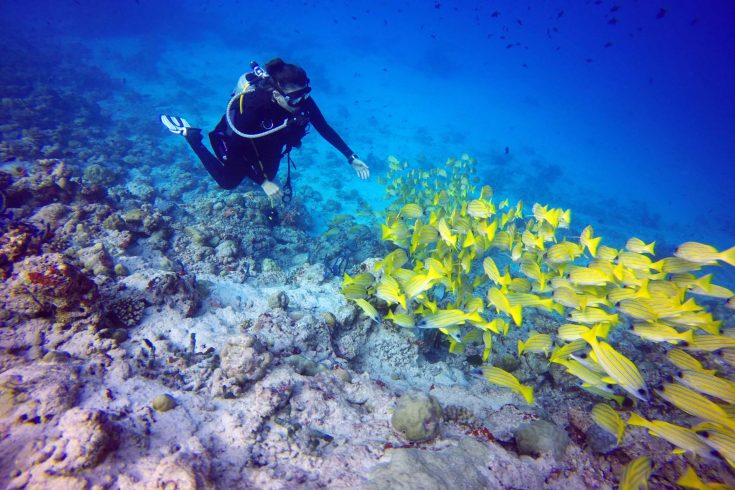 Scuba_Diving_2_By_Roberta-Mancino