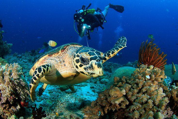 scuba-diving-940x719