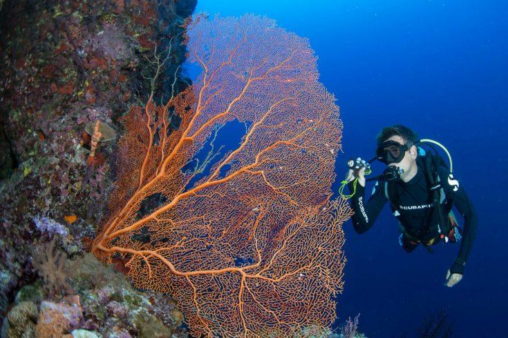 Diver-2-Credit-S.Peks-1