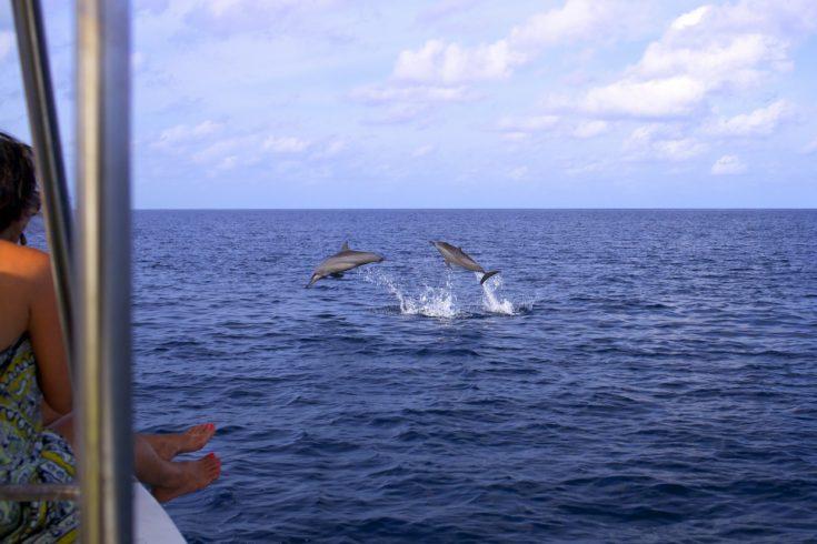 Dolphin_Cruise_2_[5506-LARGE]