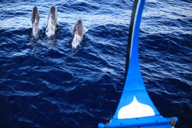 Dolphin_Cruise_[7443-LARGE]