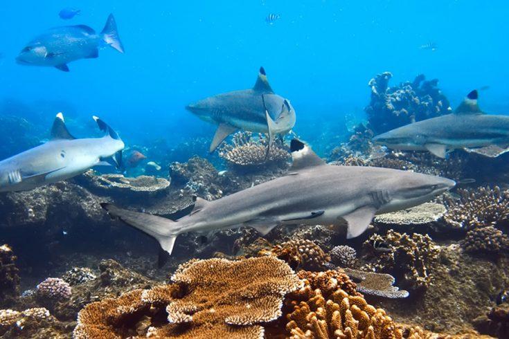 SHARK ADVENTURE SNORKELLING TRIPS